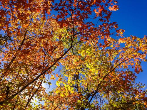Zion Fall Color Report